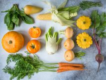Fresh harvest of vegetables flat-lay. Turnips, carrots, beet, fennel, pumpkin, spinach, rosemary, pattinsons and corn for cooking dinner. Gray and white stock images