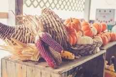 Cornucopia of pumpkins in basket at the farmer`s market for fall harvest stock images