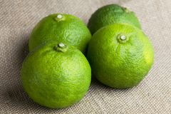 Fresh harvested Asian lime Royalty Free Stock Image
