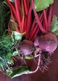 Fresh harvested beetroots and dill. On wooden table Royalty Free Stock Photos