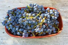 Fresh harvested blue grapes ceramic bowl vintage wood backgrounds stock photography