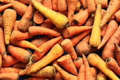 Fresh harvested carrots. The couple of the fresh harvested carrots Stock Image