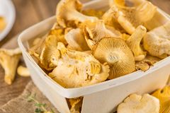 Fresh harvested Chanterelles on a wooden table. As detailed close-up shot Royalty Free Stock Photo