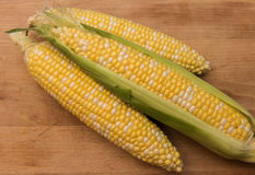 Fresh harvested corn on the cob. Freshly harvested corn on the cob sitting on a wooden background Stock Images