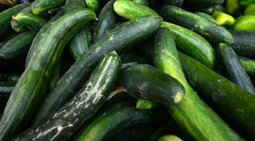 Fresh harvested cucumbers Royalty Free Stock Photos
