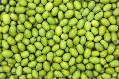 Fresh Harvested Green Olive for oil production pattern texture. Stock Photography