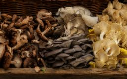 Assorted Mushrooms in a Basket Royalty Free Stock Photo