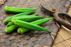 Fresh harvested okra on bamboo tray. And pruning scissors Stock Photo