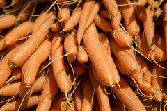 Fresh harvested organic farm grown nutritious orange carrots Stock Photo