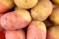 Fresh harvested potato tubers Stock Image