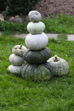 Fresh harvested pumpkins Royalty Free Stock Images