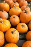 Fresh harvested pumpkins for sale Royalty Free Stock Images