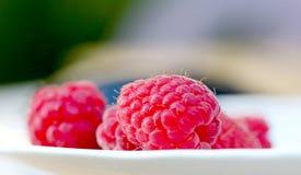 Fresh harvested Pure organic Sweet raspberry Stock Image