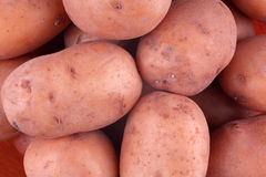 Fresh harvested red potato tubers Royalty Free Stock Photos