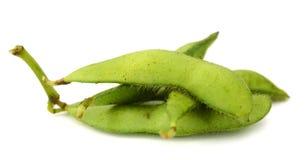 Fresh harvested soybean edamame plant isolated Royalty Free Stock Photos