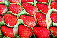 Fresh harvested strawberries background Royalty Free Stock Image