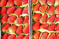 Fresh harvested strawberries background Stock Photos