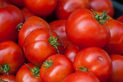 Free Fresh Harvested Tomato&x27;s In A Box Royalty Free Stock Images - 22409819