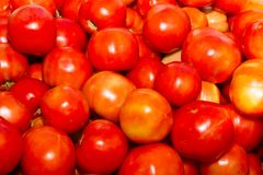 Fresh harvested tomatoes on an open air fruit Royalty Free Stock Images