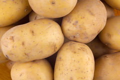 Fresh harvested yellow potato tubers Royalty Free Stock Photos