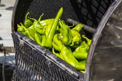 Fresh hatch chilis in an outdoor barrel roaster getting ready to be cooked stock photo