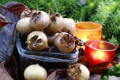 Fresh havest bio Medlar Royalty Free Stock Images