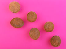 Fresh hawaiian coconuts on a bright pink background. Six whole, big, fresh, organic and tropical fruits of coconuts. Exotic cocos. Stock Image