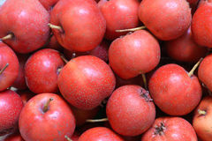 Fresh haws Royalty Free Stock Images