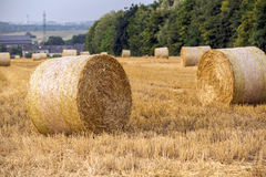 Fresh hay bales. On the agriculture field during wheat harvest time Royalty Free Stock Photos