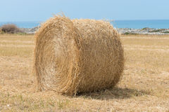 Fresh hay bales Royalty Free Stock Photos