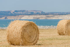 Fresh hay bales Royalty Free Stock Photo