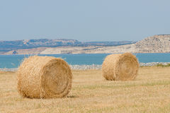 Fresh hay bales Stock Images
