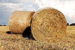Fresh hay bales Stock Image