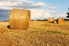 Fresh hay bales Royalty Free Stock Photography