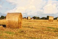 Fresh hay bales Stock Photo