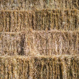 Fresh hay bales stacked Stock Photo