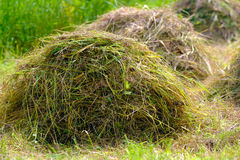 Fresh hay. High quality large photo of fresh hay: medium size fresh stacks somewhere in fields. Soft green and yellow grass tones, natural light conditions, good Stock Image