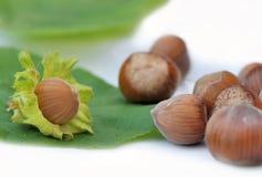 Fresh hazelnut Stock Image