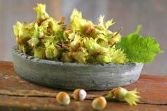 Fresh hazelnuts Royalty Free Stock Photography