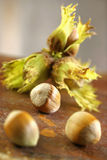 Fresh hazelnuts Stock Image