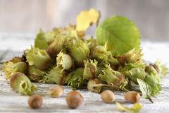 Fresh hazelnuts Royalty Free Stock Images