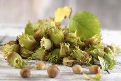 Fresh hazelnuts Royalty Free Stock Images