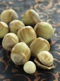 Fresh hazelnuts Stock Photography