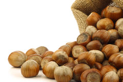 Fresh hazelnuts in a burlap bag Royalty Free Stock Images