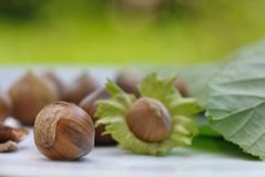 Fresh hazelnuts Royalty Free Stock Photography