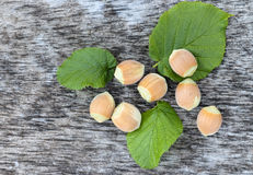 Fresh hazelnuts with green leaves stock images
