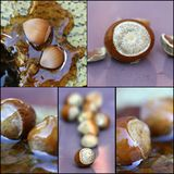 Fresh hazelnuts and honey, collage Stock Photography