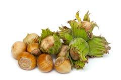 Fresh hazelnuts Stock Image