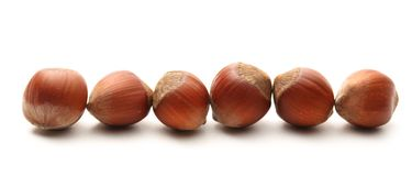 Fresh hazelnuts in line Stock Photography