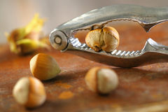 Fresh hazelnuts and nutcrackers Stock Photography